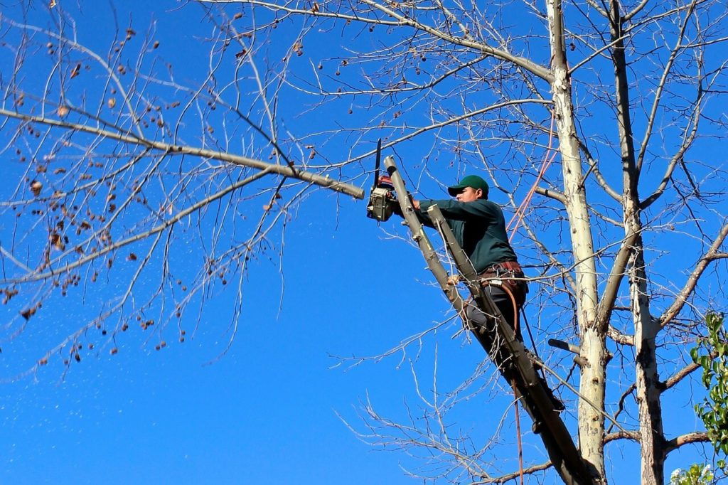 Contact Us-Fontainebleau FL Tree Trimming and Stump Grinding Services-We Offer Tree Trimming Services, Tree Removal, Tree Pruning, Tree Cutting, Residential and Commercial Tree Trimming Services, Storm Damage, Emergency Tree Removal, Land Clearing, Tree Companies, Tree Care Service, Stump Grinding, and we're the Best Tree Trimming Company Near You Guaranteed!