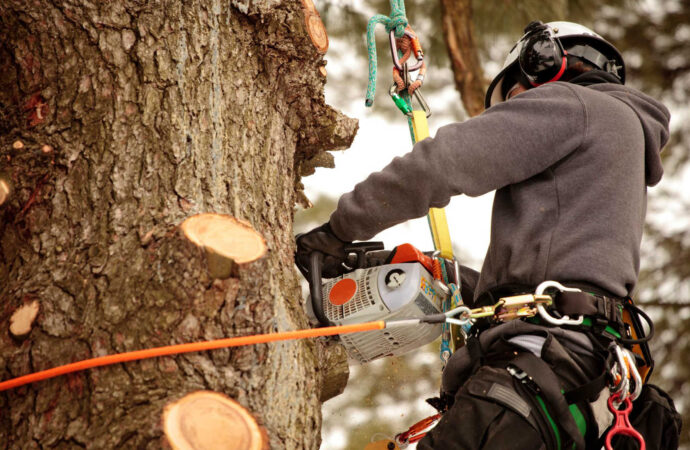 Fontainebleau FL Tree Trimming and Stump Grinding Services Home Page-We Offer Tree Trimming Services, Tree Removal, Tree Pruning, Tree Cutting, Residential and Commercial Tree Trimming Services, Storm Damage, Emergency Tree Removal, Land Clearing, Tree Companies, Tree Care Service, Stump Grinding, and we're the Best Tree Trimming Company Near You Guaranteed!