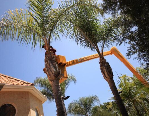 Palm Tree Trimming-Fontainebleau FL Tree Trimming and Stump Grinding Services-We Offer Tree Trimming Services, Tree Removal, Tree Pruning, Tree Cutting, Residential and Commercial Tree Trimming Services, Storm Damage, Emergency Tree Removal, Land Clearing, Tree Companies, Tree Care Service, Stump Grinding, and we're the Best Tree Trimming Company Near You Guaranteed!