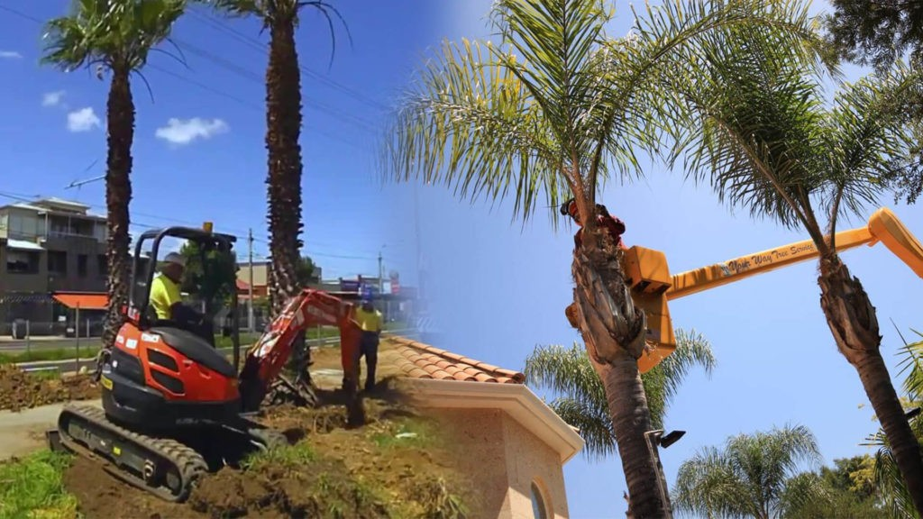 Palm tree trimming & palm tree removal-Fontainebleau FL Tree Trimming and Stump Grinding Services-We Offer Tree Trimming Services, Tree Removal, Tree Pruning, Tree Cutting, Residential and Commercial Tree Trimming Services, Storm Damage, Emergency Tree Removal, Land Clearing, Tree Companies, Tree Care Service, Stump Grinding, and we're the Best Tree Trimming Company Near You Guaranteed!