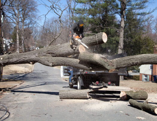 Residential Tree Services-Fontainebleau FL Tree Trimming and Stump Grinding Services-We Offer Tree Trimming Services, Tree Removal, Tree Pruning, Tree Cutting, Residential and Commercial Tree Trimming Services, Storm Damage, Emergency Tree Removal, Land Clearing, Tree Companies, Tree Care Service, Stump Grinding, and we're the Best Tree Trimming Company Near You Guaranteed!
