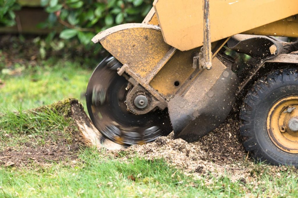 Stump Grinding-Fontainebleau FL Tree Trimming and Stump Grinding Services-We Offer Tree Trimming Services, Tree Removal, Tree Pruning, Tree Cutting, Residential and Commercial Tree Trimming Services, Storm Damage, Emergency Tree Removal, Land Clearing, Tree Companies, Tree Care Service, Stump Grinding, and we're the Best Tree Trimming Company Near You Guaranteed!