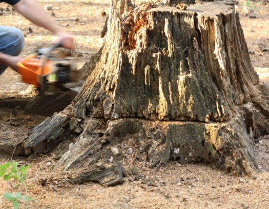 Stump Removal-Fontainebleau FL Tree Trimming and Stump Grinding Services-We Offer Tree Trimming Services, Tree Removal, Tree Pruning, Tree Cutting, Residential and Commercial Tree Trimming Services, Storm Damage, Emergency Tree Removal, Land Clearing, Tree Companies, Tree Care Service, Stump Grinding, and we're the Best Tree Trimming Company Near You Guaranteed!