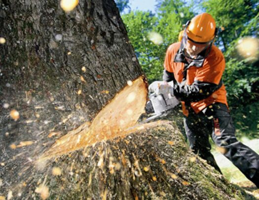 Tree Cutting-Fontainebleau FL Tree Trimming and Stump Grinding Services-We Offer Tree Trimming Services, Tree Removal, Tree Pruning, Tree Cutting, Residential and Commercial Tree Trimming Services, Storm Damage, Emergency Tree Removal, Land Clearing, Tree Companies, Tree Care Service, Stump Grinding, and we're the Best Tree Trimming Company Near You Guaranteed!