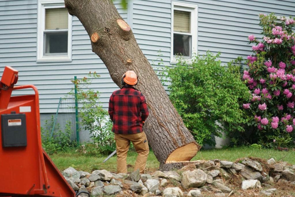 Tree Removal-Fontainebleau FL Tree Trimming and Stump Grinding Services-We Offer Tree Trimming Services, Tree Removal, Tree Pruning, Tree Cutting, Residential and Commercial Tree Trimming Services, Storm Damage, Emergency Tree Removal, Land Clearing, Tree Companies, Tree Care Service, Stump Grinding, and we're the Best Tree Trimming Company Near You Guaranteed!