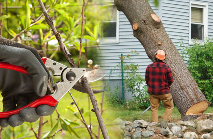 Tree pruning & tree removal-Fontainebleau FL Tree Trimming and Stump Grinding Services-We Offer Tree Trimming Services, Tree Removal, Tree Pruning, Tree Cutting, Residential and Commercial Tree Trimming Services, Storm Damage, Emergency Tree Removal, Land Clearing, Tree Companies, Tree Care Service, Stump Grinding, and we're the Best Tree Trimming Company Near You Guaranteed!